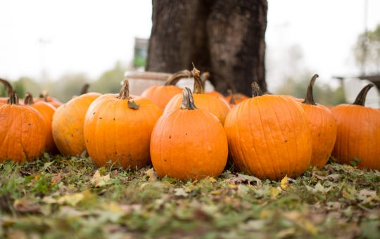 10 Best Pumpkin Patches in Kentucky